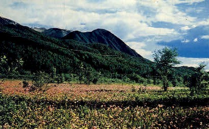 Field of Shooting Stars, Eklutna - Eklutna Flats, Alaska AK Postcard