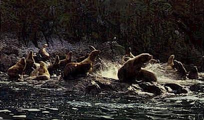 Alaskan Sea Lions - Kodiak Postcard