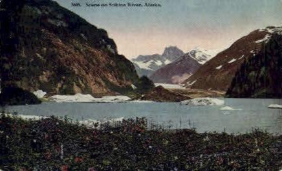 Scene on Stikine River - Alaska AK Postcard