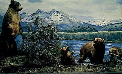 A family of Kodiak bears - Misc, Alaska AK Postcard