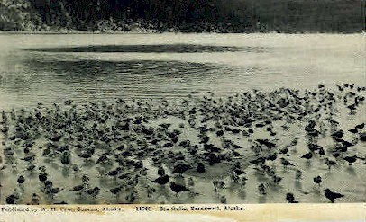 Sea Gulls - Treadwell, Alaska AK Postcard