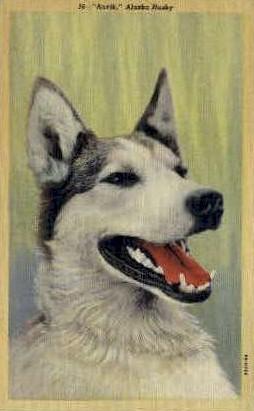 Anvik Alaska Husky - Misc Postcard