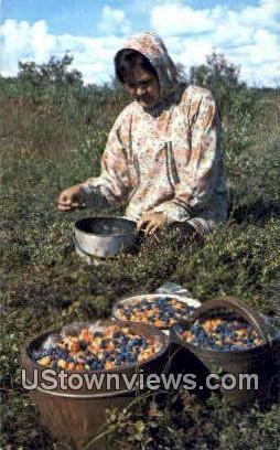 Lucy Crow Picking Berries - Bethel, Alaska AK Postcard