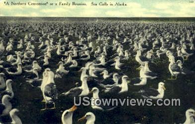 Northern Convention - Misc, Alaska AK Postcard