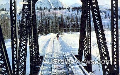 Moose - Honolulu Creek, Alaska AK Postcard