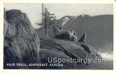 Hair Seals - Southeast Alaska Postcards, Alaska AK Postcard