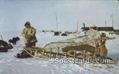 Eskimo Sled & Dogs - Misc, Alaska AK Postcard