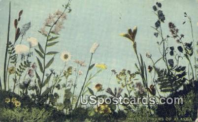 Wild Flowers - Misc, Alaska AK Postcard