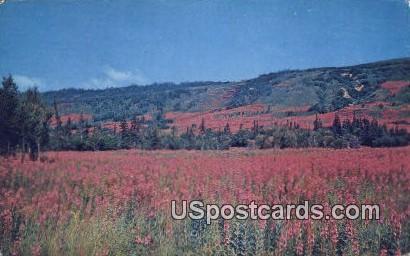 Fireweed - Homer, Alaska AK Postcard