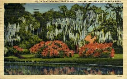 Live oaks & Spanish Moss - Misc, Alabama AL Postcard