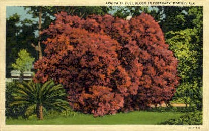 Azaleas - Mobile, Alabama AL Postcard