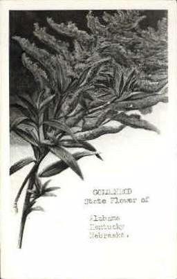 Goldenrod, State Flower - Misc, Alabama AL Postcard