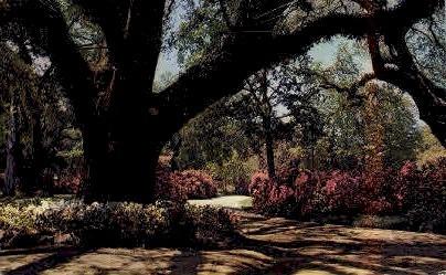 Long Gardens - Mobile, Alabama AL Postcard