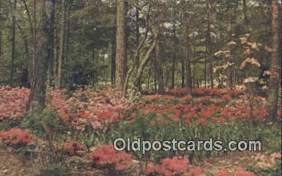 Noccalula Falls Park - Gadsden, Alabama AL Postcard