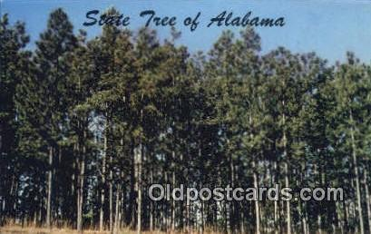Southern Pine, State Tree - Alabama AL Postcard