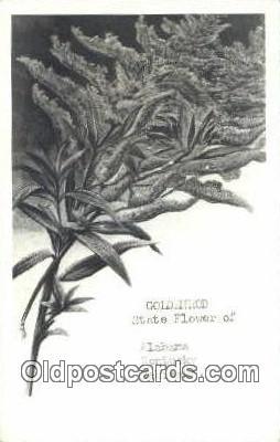 Golden Rod, State Flower - Misc, Alabama AL Postcard