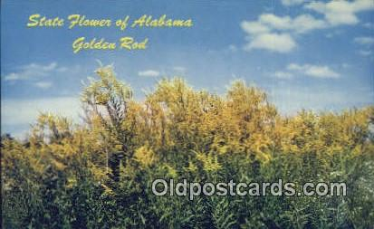 Golden Rod, State Flower - Alabama AL Postcard