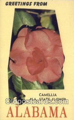 Camellia, State Flower - Alabama AL Postcard