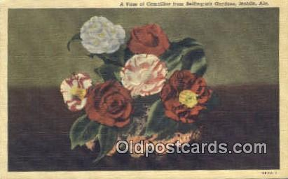 Camellia, State Flower - Mobile, Alabama AL Postcard