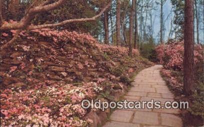 Flagstone, Azaleas, Bellingrath Garden - Mobile, Alabama AL Postcard