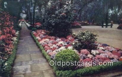 Camellias, Bellingrath Garden - Mobile, Alabama AL Postcard