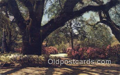 Long Gardens - Mobile, Alabama AL Postcard