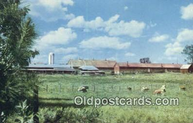 Placid Oaks Farms - St Bernard, Alabama AL Postcard