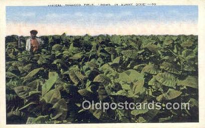 Tobacco Field - Misc, Alabama AL Postcard