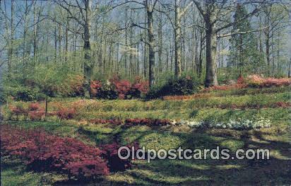 Azaleas, Dogwood - Misc, Alabama AL Postcard