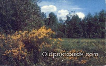Goldenrod - Misc, Alabama AL Postcard