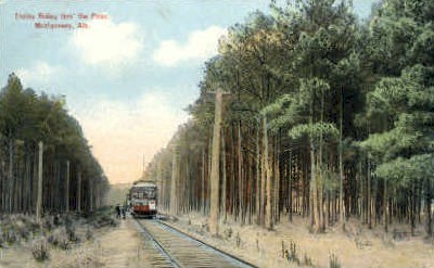 Trolley Riding thro' the Pines - Montgomery, Alabama AL Postcard