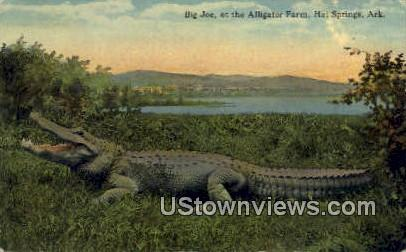 Big Joe, Alligator Farm - Hot Springs, Arkansas AR Postcard