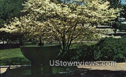 Flowering Dogwood & Thermal Fountain - Hot Springs National Park, Arkansas AR Postcard
