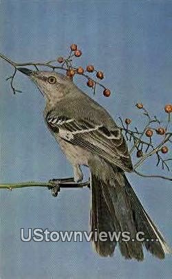 Mockingbird, State Bird - Arkansas AR Postcard