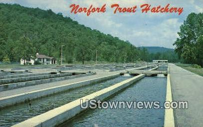 Norfork Trout Hatchery - Norfork Dam, Arkansas AR Postcard