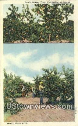 Peach Picking - Clarksville, Arkansas AR Postcard