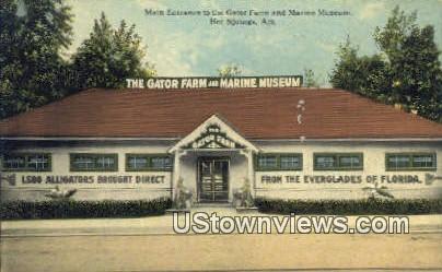 Gator Farm, Marine Museum - Hot Springs, Arkansas AR Postcard
