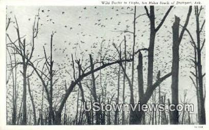 Wild Ducks in Flight - Stuttgart, Arkansas AR Postcard