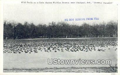 Wild Ducks on a Lake - Stuttgart, Arkansas AR Postcard