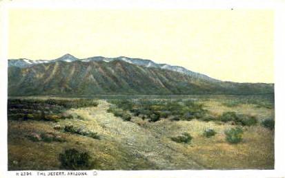 The Desert - Arizona AZ Postcard