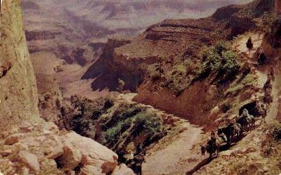 Mule Train Onto the Grand Canyon - Grand Canyon National Park, Arizona AZ Postcard