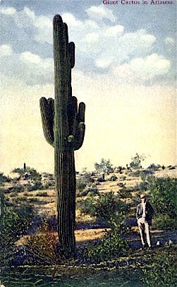 Giant Cactus - Misc, Arizona AZ Postcard