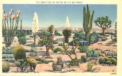 Varieties of Cacti - Misc, Arizona AZ Postcard