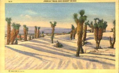 Joshua Trees and Desert Sands - Misc, Arizona AZ Postcard
