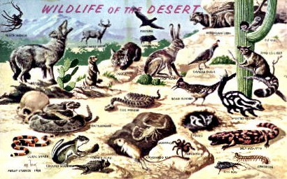 Wildlife in Southwestern Desert - Misc, Arizona AZ Postcard