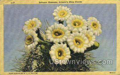 Sahuaro Blossoms - Misc, Arizona AZ Postcard