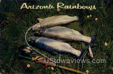 Rainbow Trout - Misc, Arizona AZ Postcard