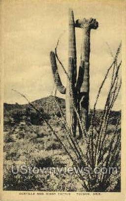 Ocatilla & Giant Cactus - Tucson, Arizona AZ Postcard