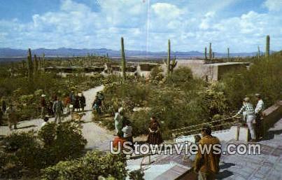 Remada, Sonora Desert Museum - Tucson, Arizona AZ Postcard