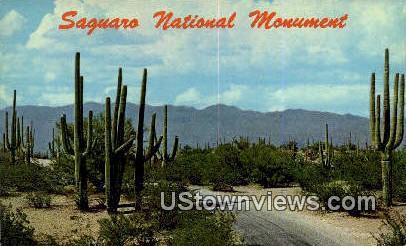Saguaro National Monument - Tucson, Arizona AZ Postcard